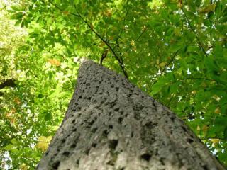 Drevo