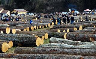 Dražba lesa 2020