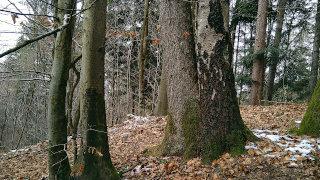 Gozd v zimskem času