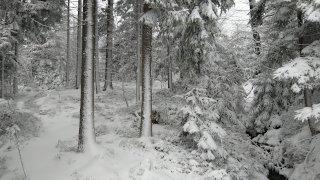 Gozd v snegu