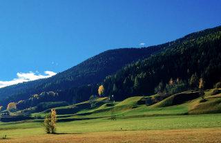 Gozd na hribu in travnik