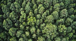 Pogled na gozd iz zraka