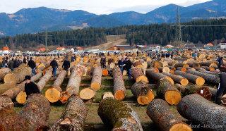 Hlodi na dražbi lesa Slovenj Gradec