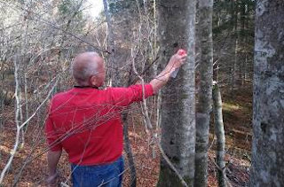 Latnik gozda