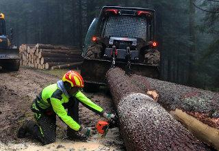 Prežagovanje hloda na gozdni cesti