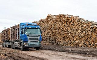 Polno skladišče lesa