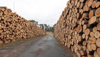 Skladišče lesa