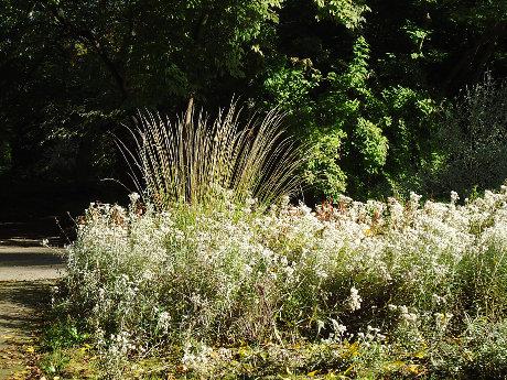 Botanični vrt Berlin